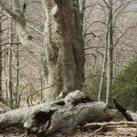 El bosc_C42